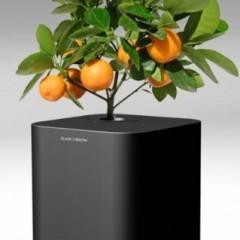 Click & Grow, Um Vaso de Plantas Controlado por Computador