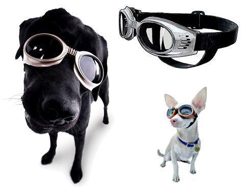 Óculos para Cachorro!