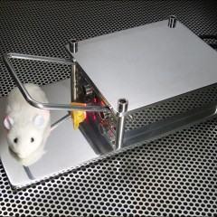 Isso sim é uma ratoeira e tanto!