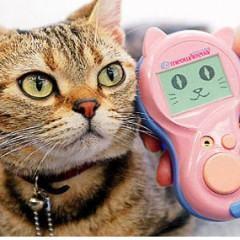 Tradutor Universal de Miado de Gatos