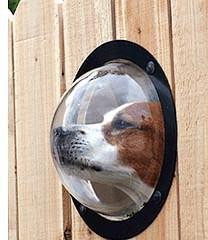 Uma Janela Para Seu Cão