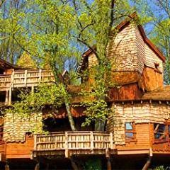 Quem Gosta de uma Casa na Árvore?