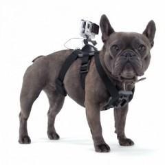 GoPro Fetch captura o ponto de vista do seu melhor amigo